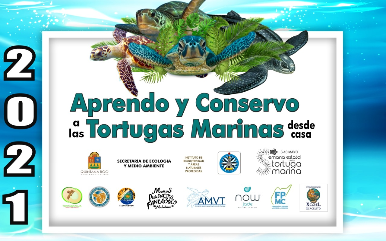 Aprendo y conservo a las tortugas marinas desde casa